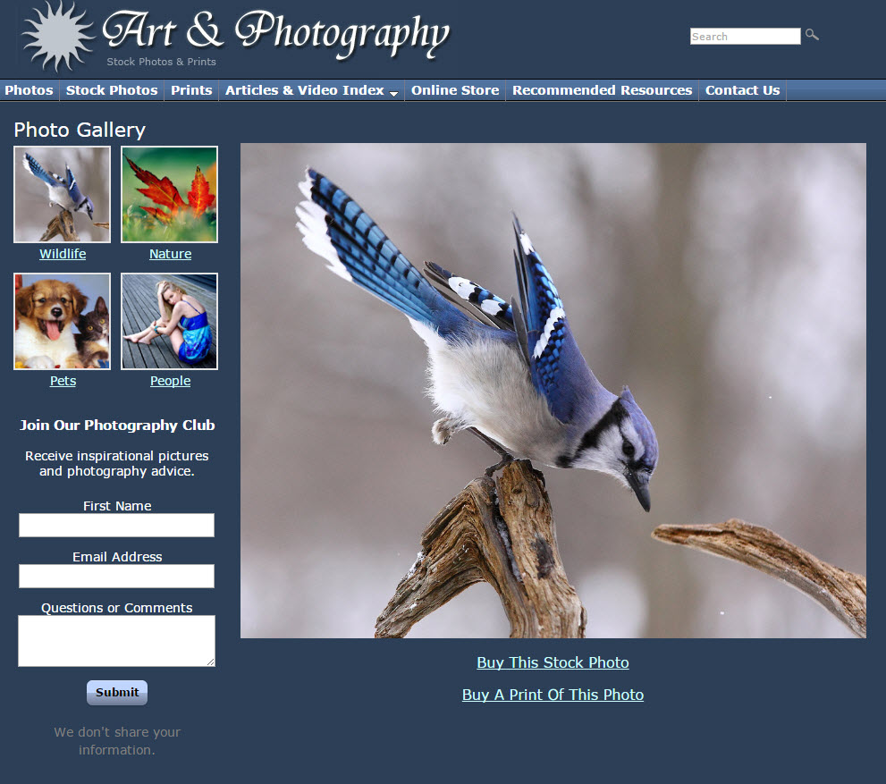 free website Art & Photography